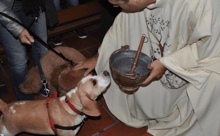 Les animaux ont-ils leur place dans l'Église ?